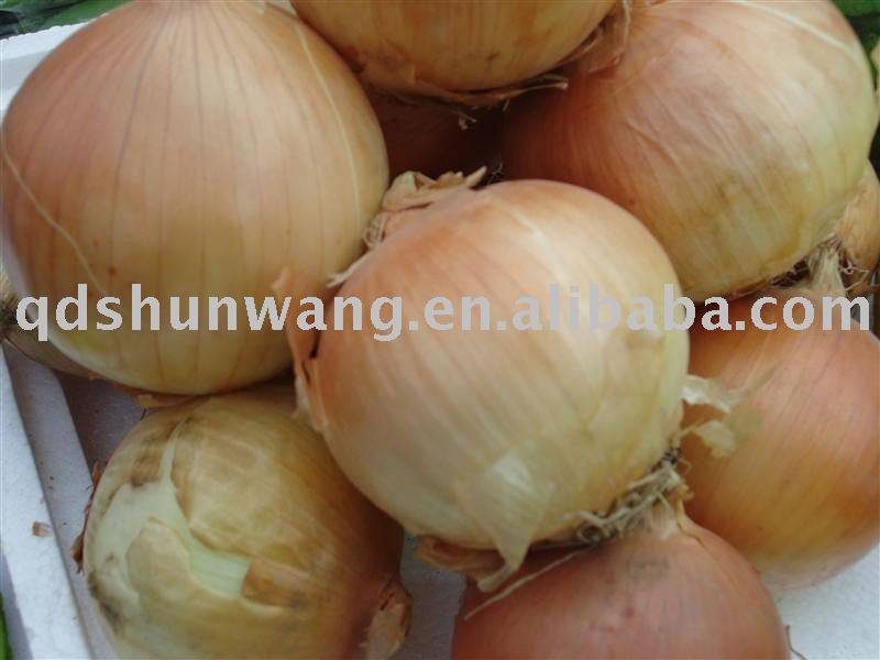 top chinese fresh yellow onion