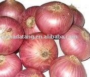 fresh onion red onion