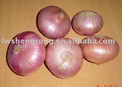onion,fresh onion,chinese onion