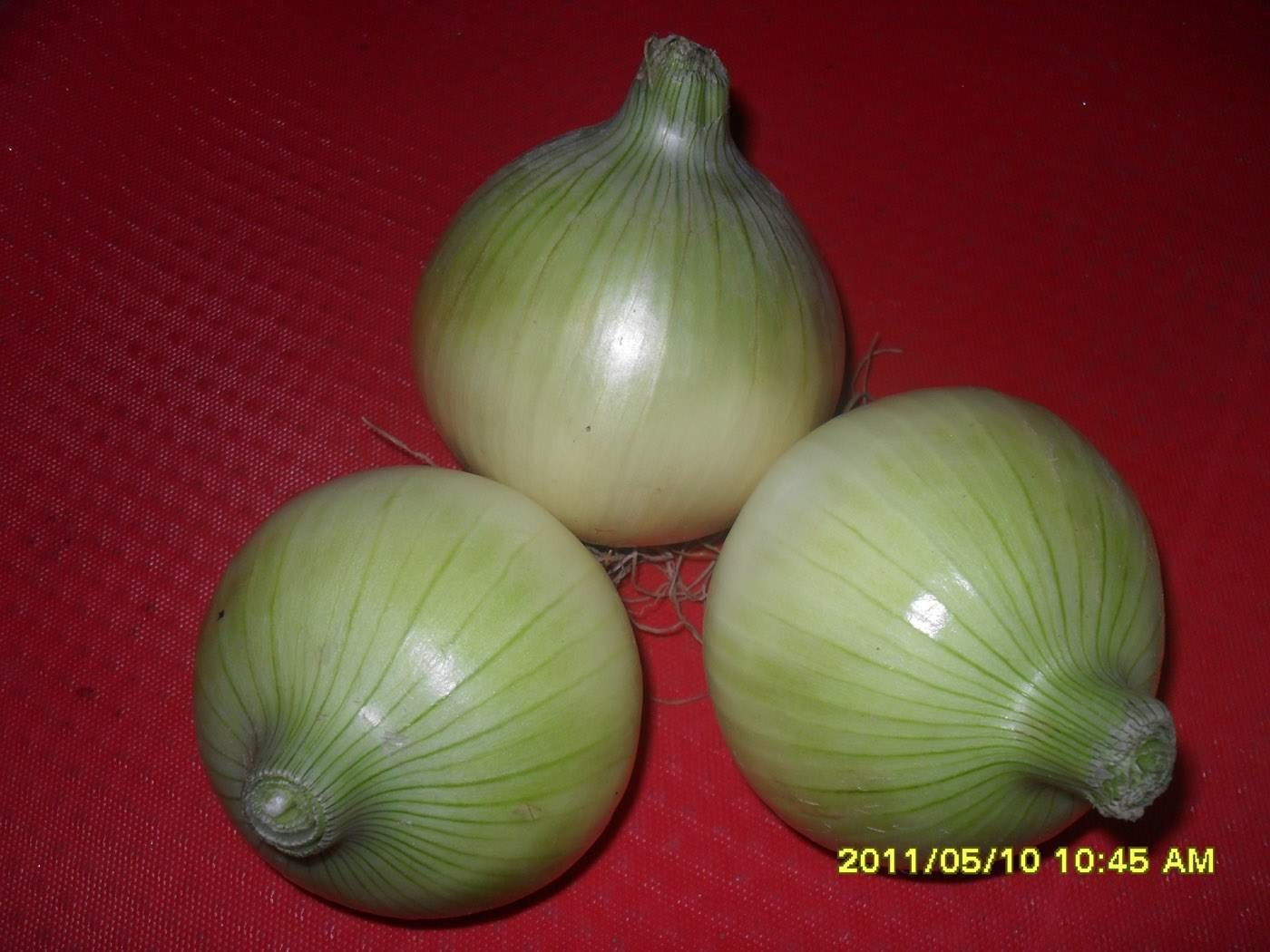 organic fresh yellow onion