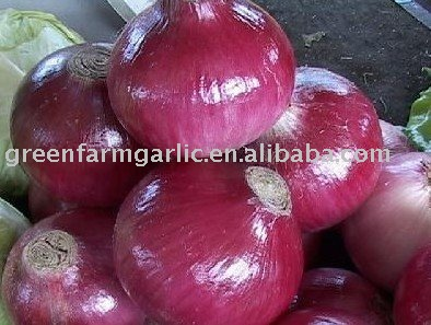 3-5 cm Small Red Onion Corps