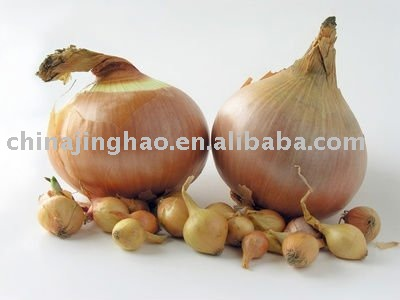Low Price and Good Quality - Chinese Fresh Red/Yellow Onion (Big/Small Size)