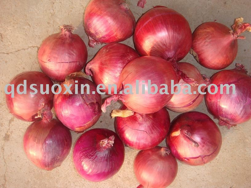 2010 New Crop Red Onion