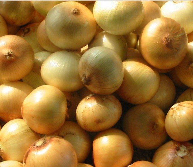 Pastebin Onion Related Keywords & Suggestions Vk Videos.