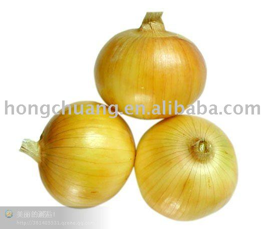 top quality yellow onions of China