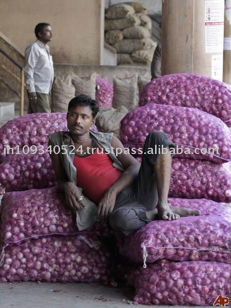 Exporter of Indian Red Onion