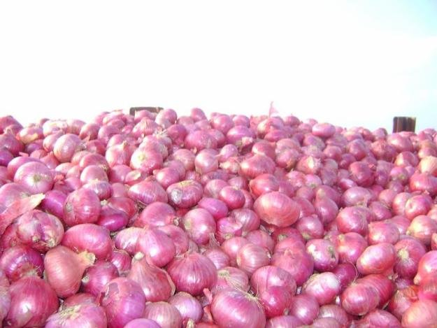 red onion reday for sale products,Cameroon re