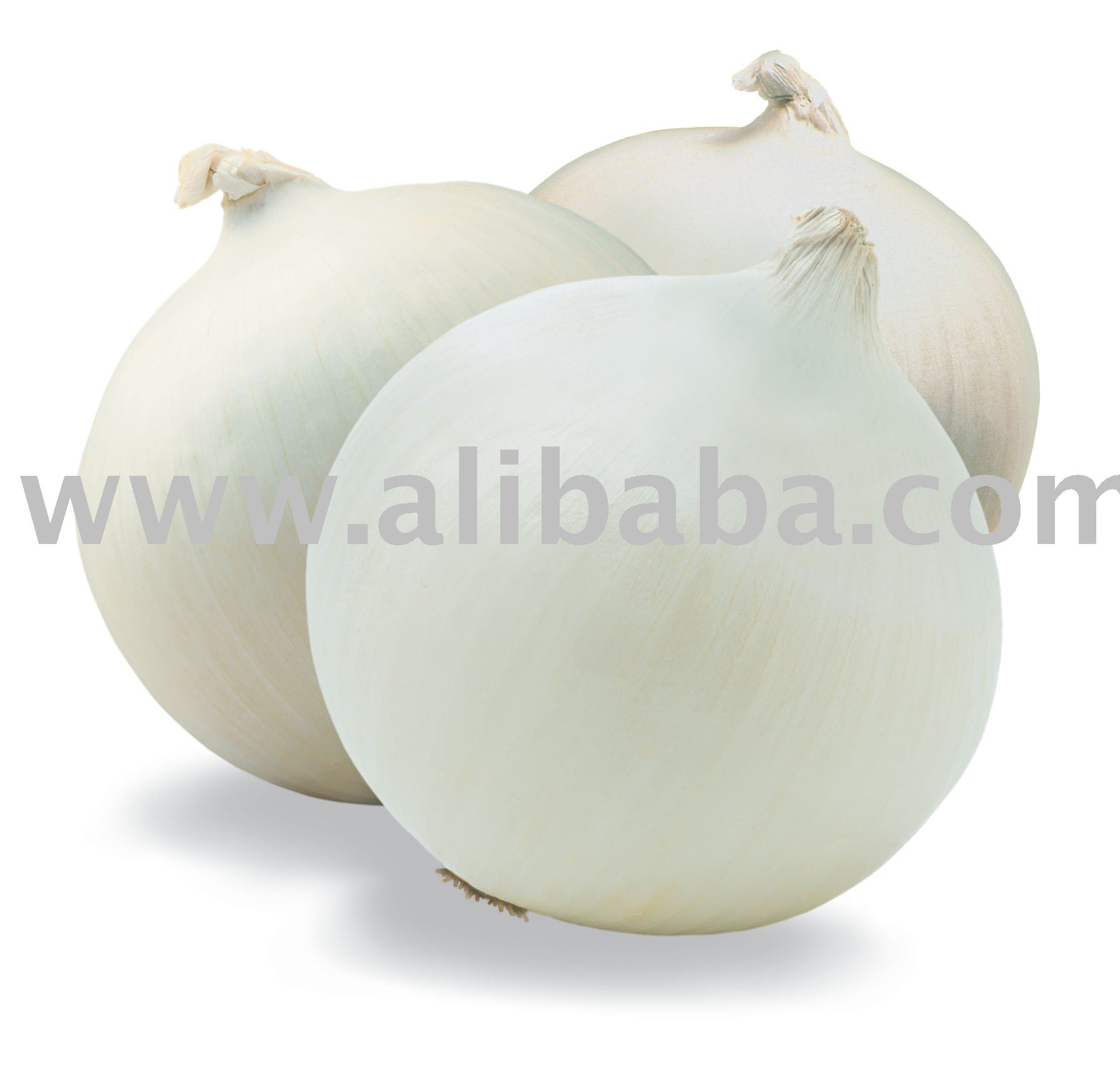 All Types Of Onions