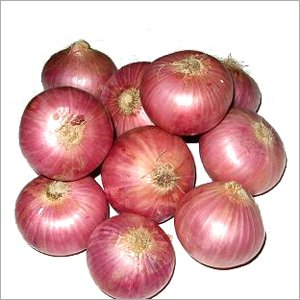Fresh Onions for Sale