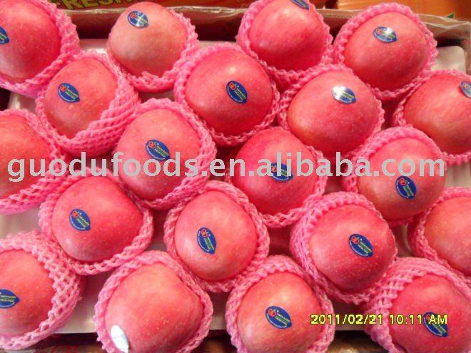 Yantai fresh fruit red fuji apple products,China Yantai fresh fruit red fuji apple supplier660 x 495 jpeg 67kB