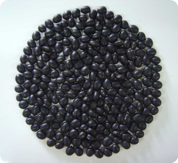 black soybean