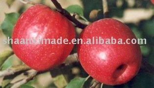 Qin    guan   apple