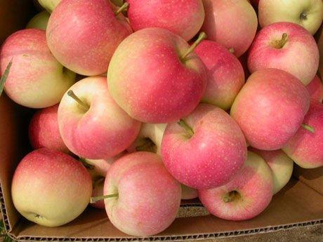 Fresh Appels for sale