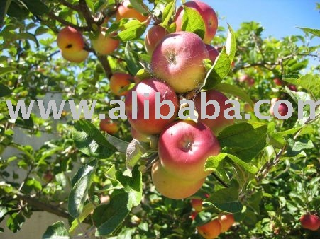 Apples and other fresh fruits on sale