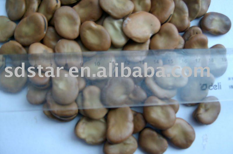 2010 new crop  chinese   broad   bean