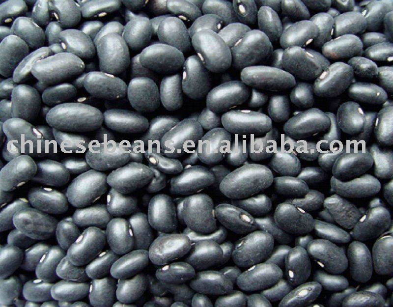 new crop chinese small black kidney beans dry beans
