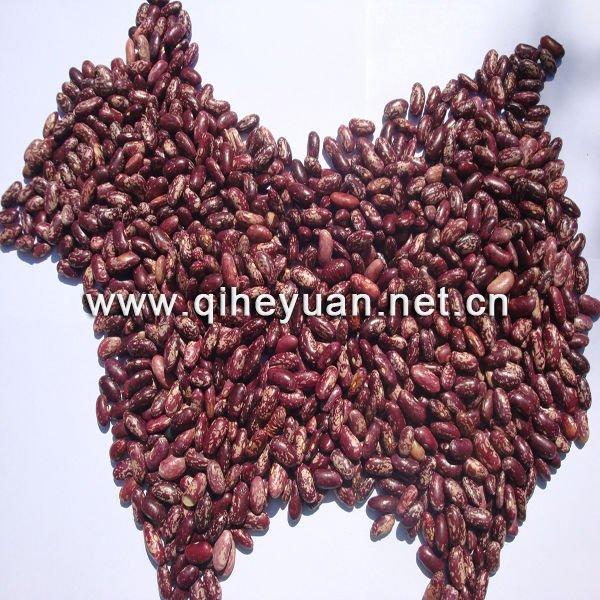 Purple  Speckle  Bean s