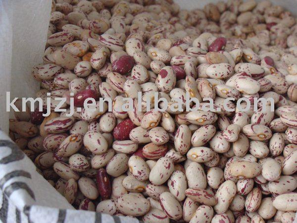 Hot sale  Light speckled kidney beans