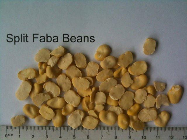 Split Faba Beans