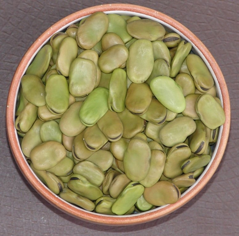 Broad bean or Fava bean