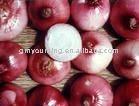 2011 Chinese  Fresh   Red   Big   Onion