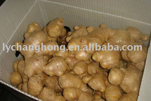 Best-quality fresh ginger