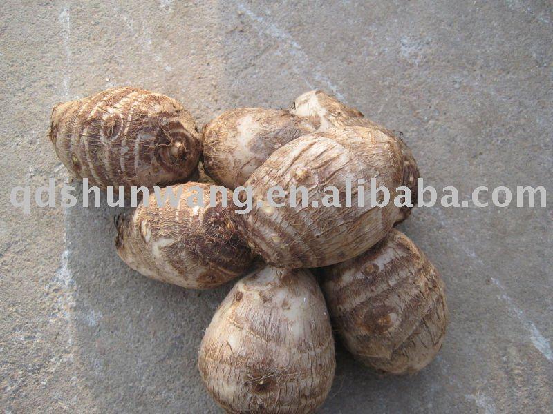 top chinese  fresh   big   taro  root 130g