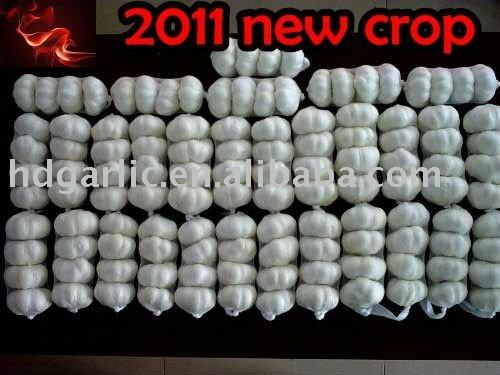 2011 new yield fresh garlic