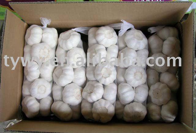 New Fresh White Garlic