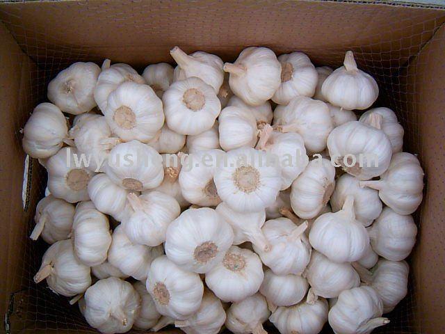 2011 new yield white garlic