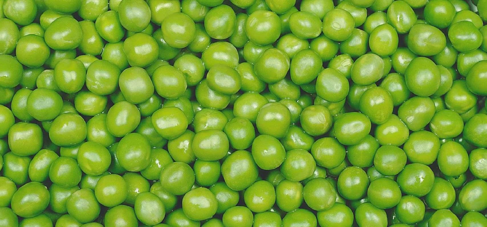 Vegetables Okra Products Egypt Vegetables Okra Supplier