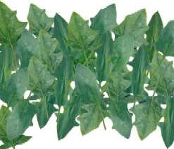 Frozen Spinach - Spinach Leaves
