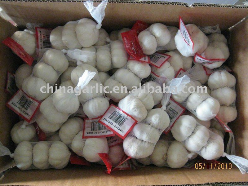 garlic,fresh garlic,jinxiang garlic