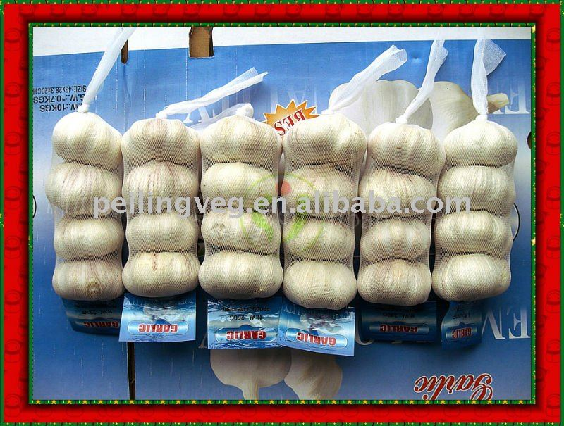 fresh new crop garlic