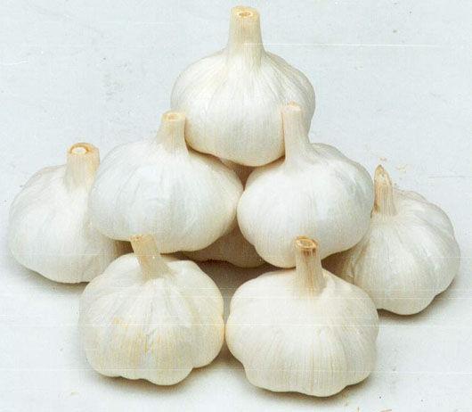 Best Garlic Bulb Products,Moldavia Best Garlic Bulb Supplier