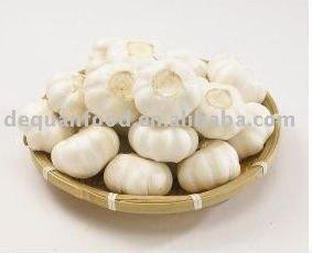 Pure white garlic 2011 crop 4.5-6.5cm