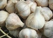 Dry Garlic Pure Garlic Organic Fresh Peeled Garlic Indian Premium Garlic Pure Garlic Garlic Huge Pro