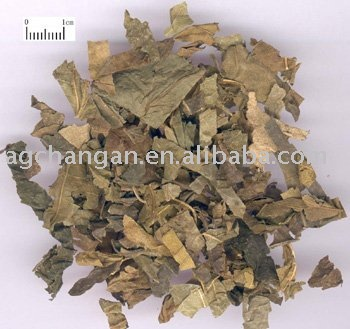Sell/offer/supply Mulberry Leaf/FOLIUM MORI/tea/sang ye/herb medicine