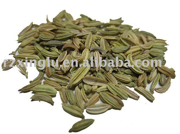Fennel Seeds in Malay Chinese Fennel Seeds