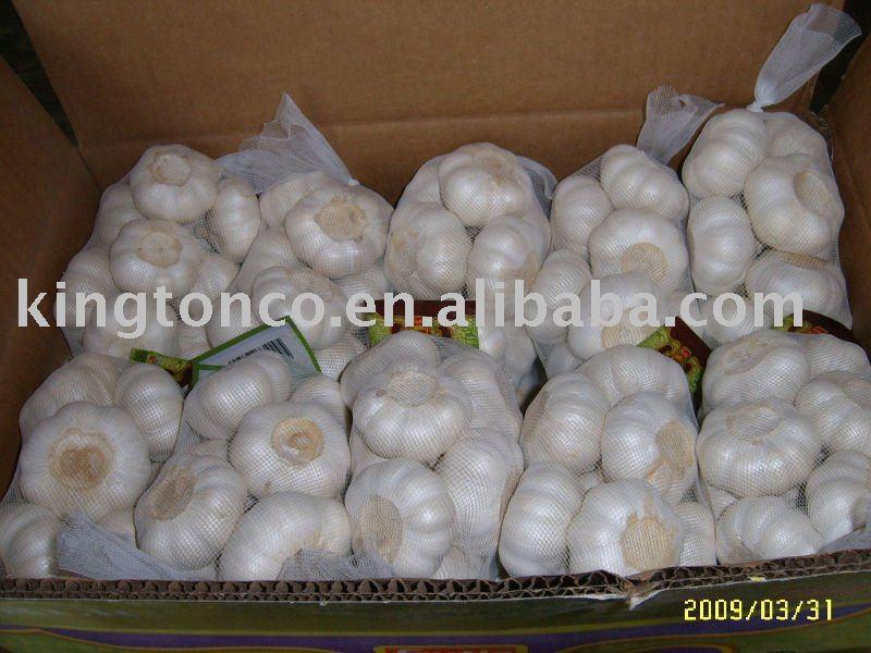 fresh dry garlic