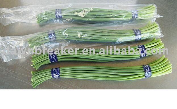 Fresh garlic sprout (garlic sprout / garlic shoot )