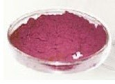 Red Cabbage Color|pigment|organic pigments