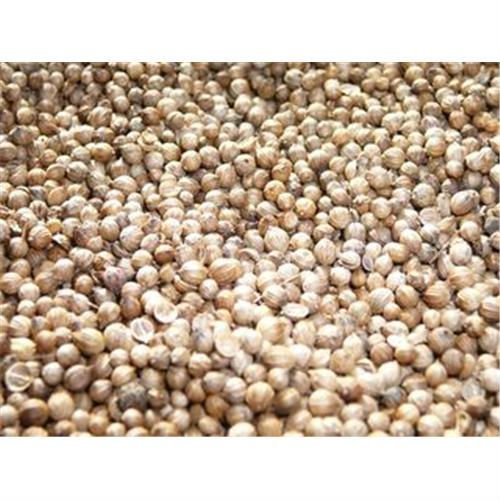 Big Coriander Seed, Small Coriander Seed, Indian Coriander Seed,Fresh Indian Coriander Seed, Satikuw