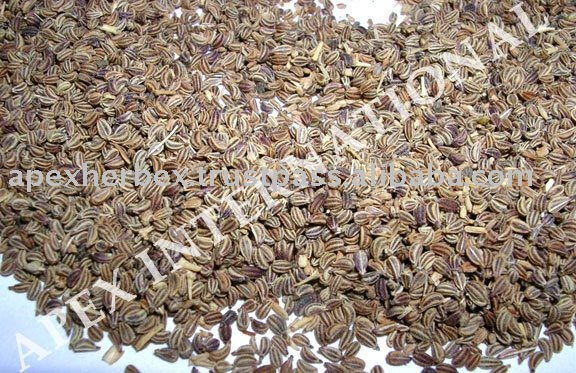 Pure Carum Copticum / Bishop's Weed / Ajwain