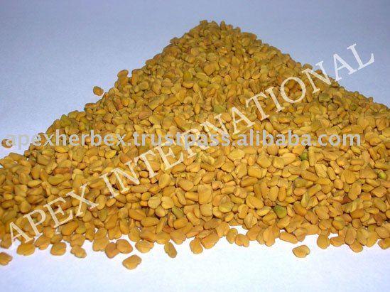 Trigonella Foenum-Graecum products,India Trigonella Foenum-Graecum ...