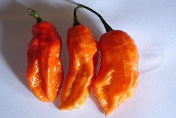 Bhoot Jolokia-Ghost Chili