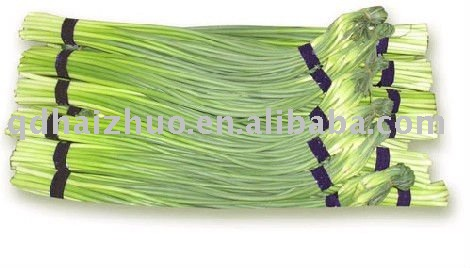 Shandong garlic sprout 2011