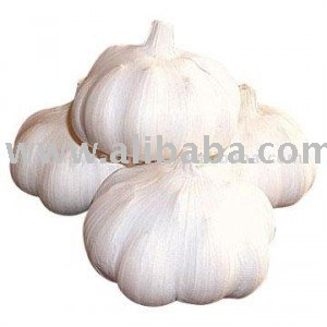 Red Rezan garlic