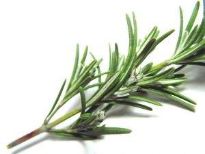 Organic   Rosemary  ( Fresh, dried,oil)
