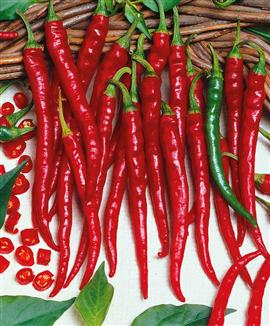 Chilli Pepper 'Cayenne Long Slim'